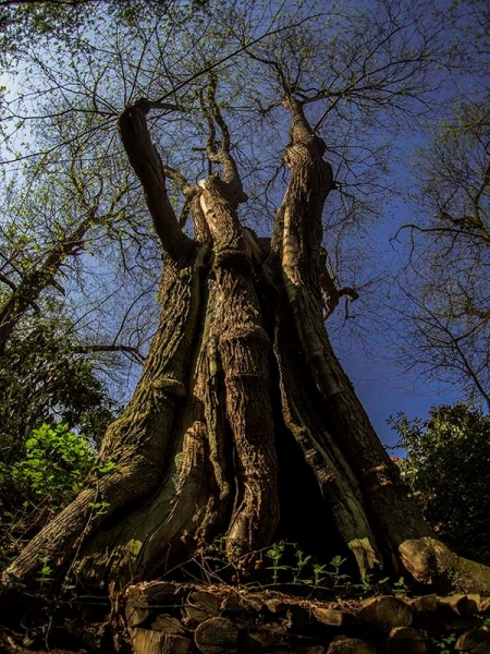 "Fotograaf: Els Baltjes 'De Kabouterboom"""