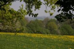 Fotograaf: Astrid Sanders 'Elyzeese velden bij Beek'