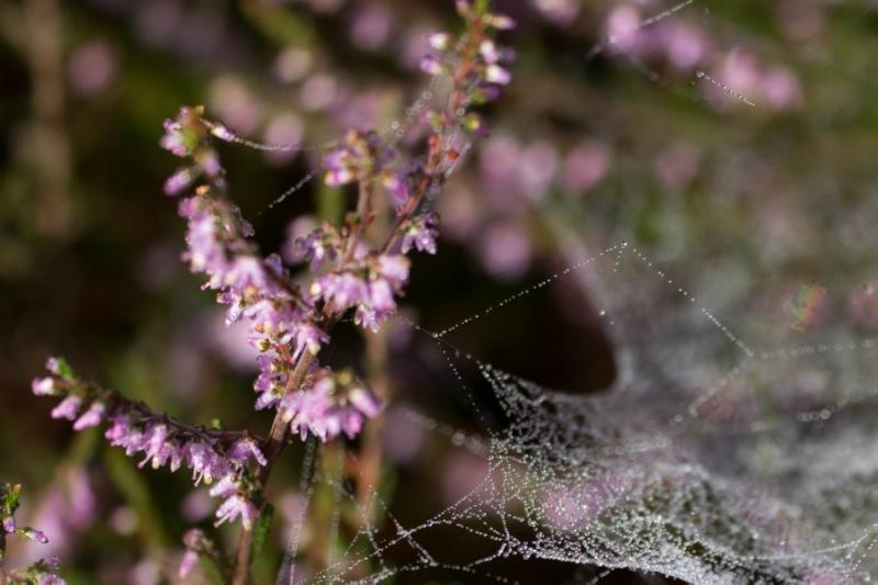 Fotograaf: Astrid Sanders 'Heide met pareltjes'