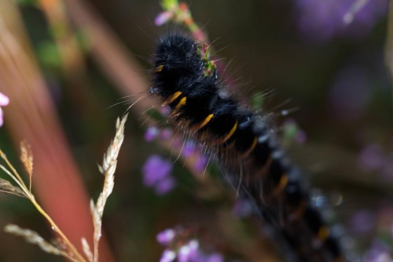 Fotograaf: Astrid Sanders 'Welke vlinder wordt dit?'