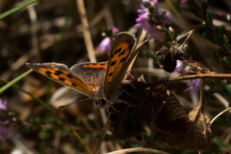Fotograaf: Astrid Sanders 'Vlinder'