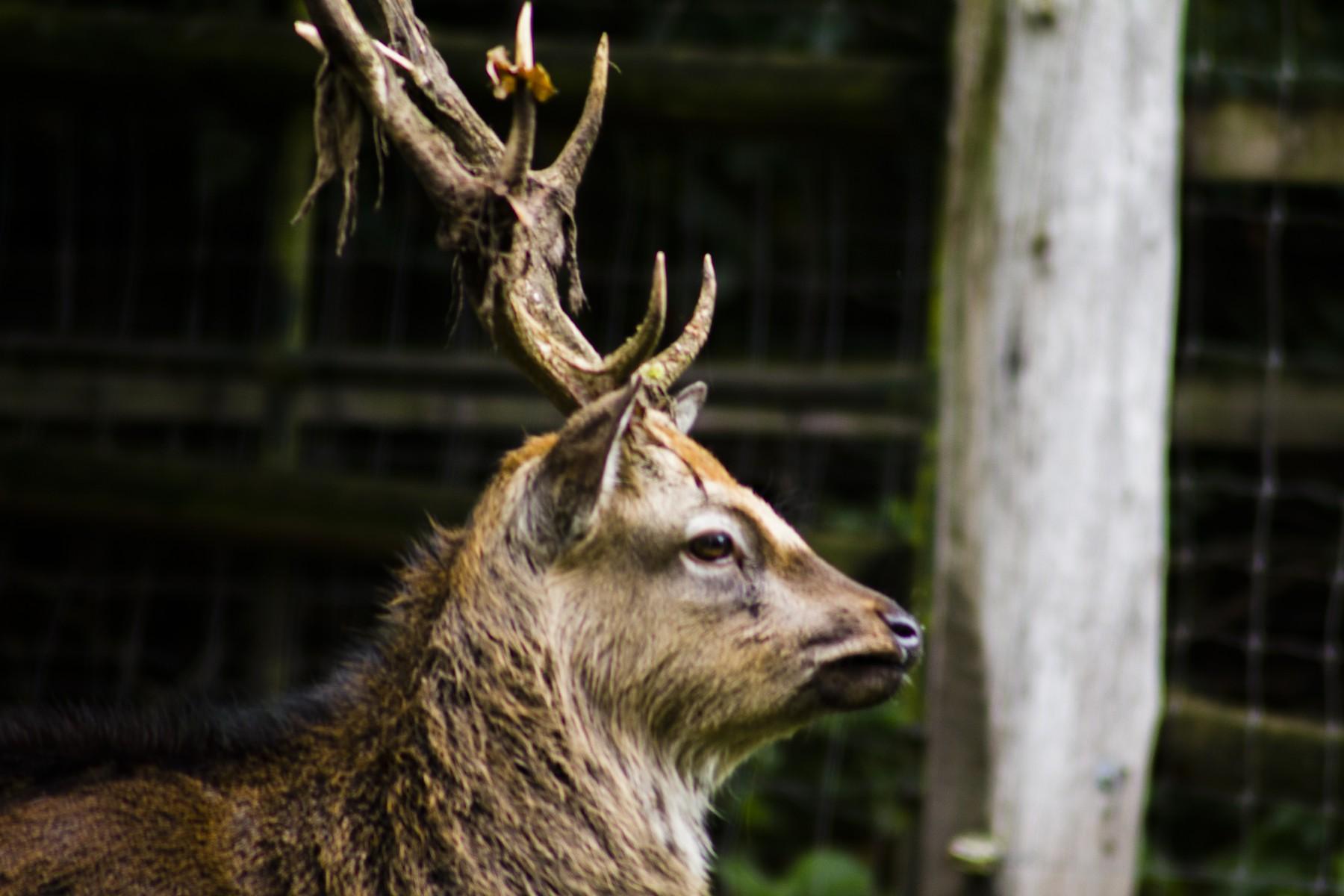 biotopwildpark-anholter-schweiz-201019-isselburg-dld_mg_7612b