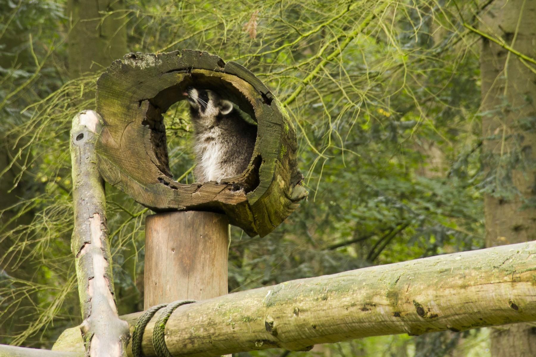 biotopwildpark-anholter-schweiz-201019-isselburg-dld_mg_7642b