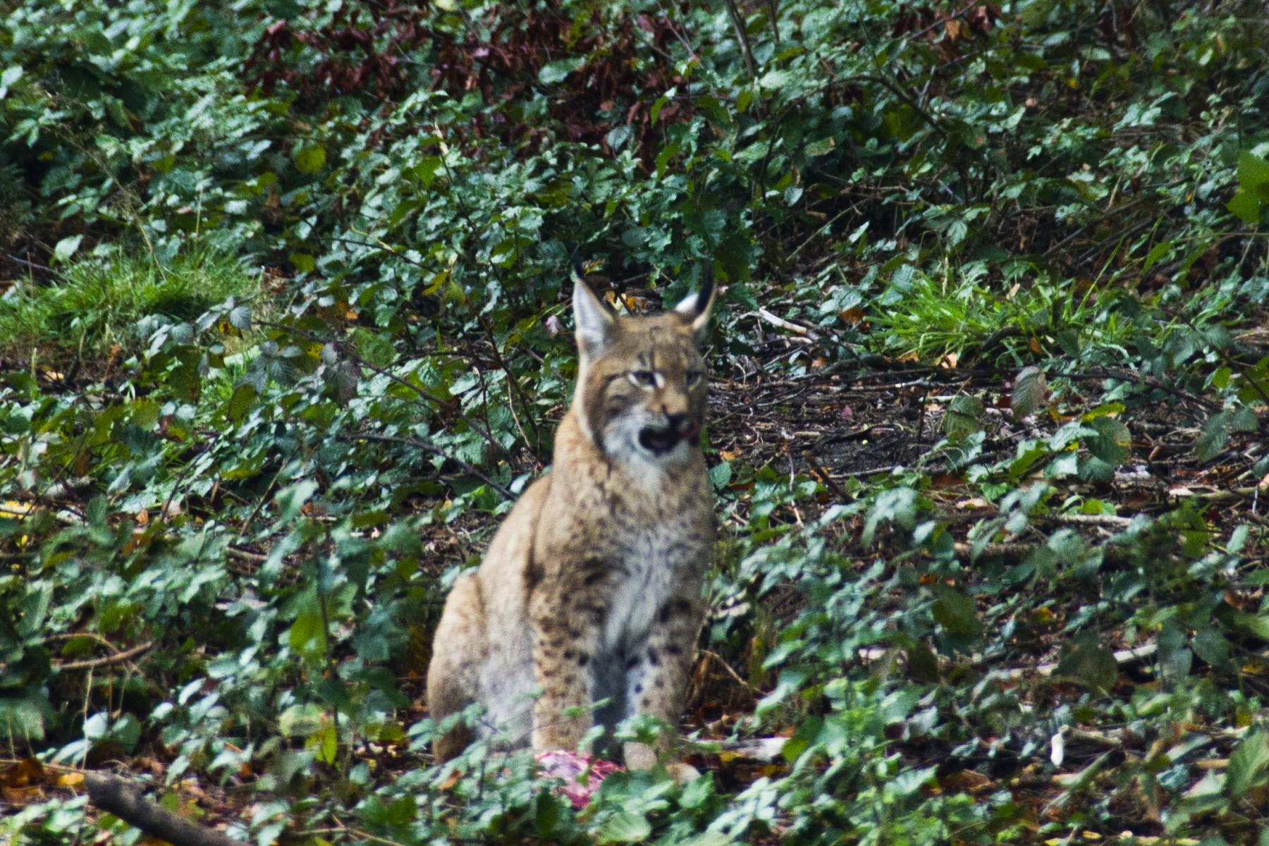 biotopwildpark-anholter-schweiz-201019-isselburg-dld_mg_7758-b