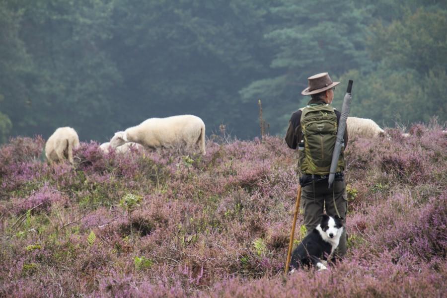 Astrid Sanders: De herder waakt over de kudde