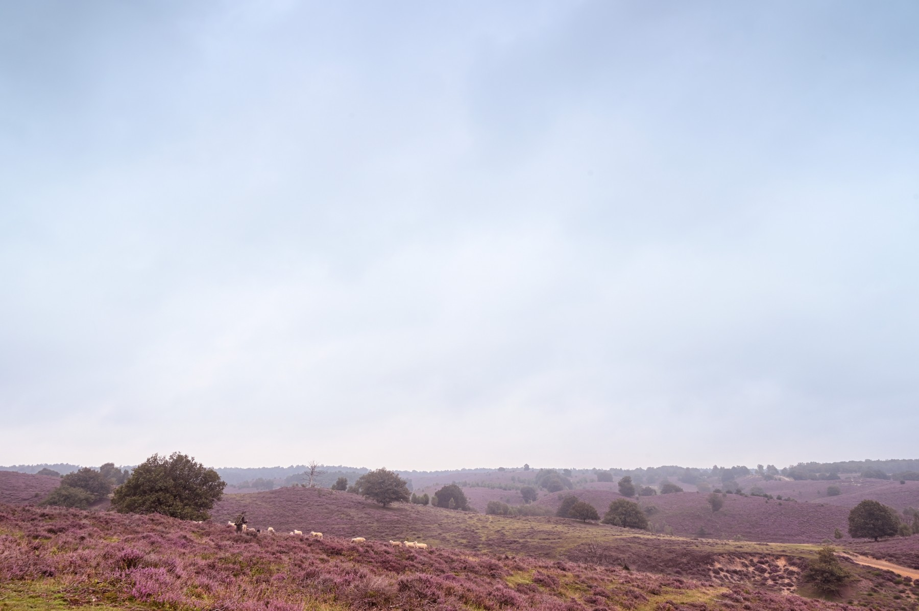 Bianca Dekkers-van Uden, grijze lucht boven een paarse Posbank