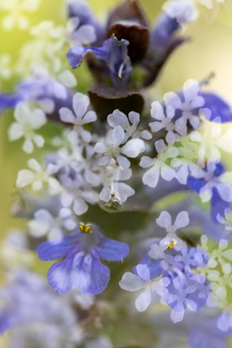 Renate: Bloemenfeest