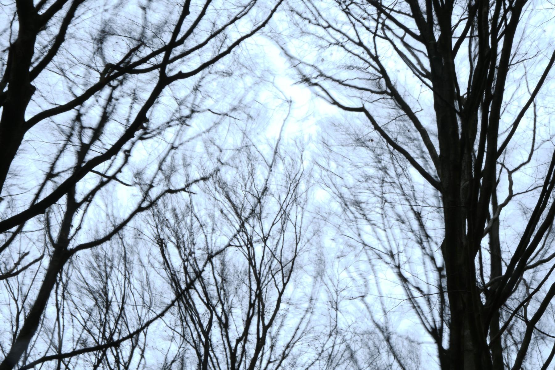 Karin Kalmár; Hoge bomen vangen veel wind