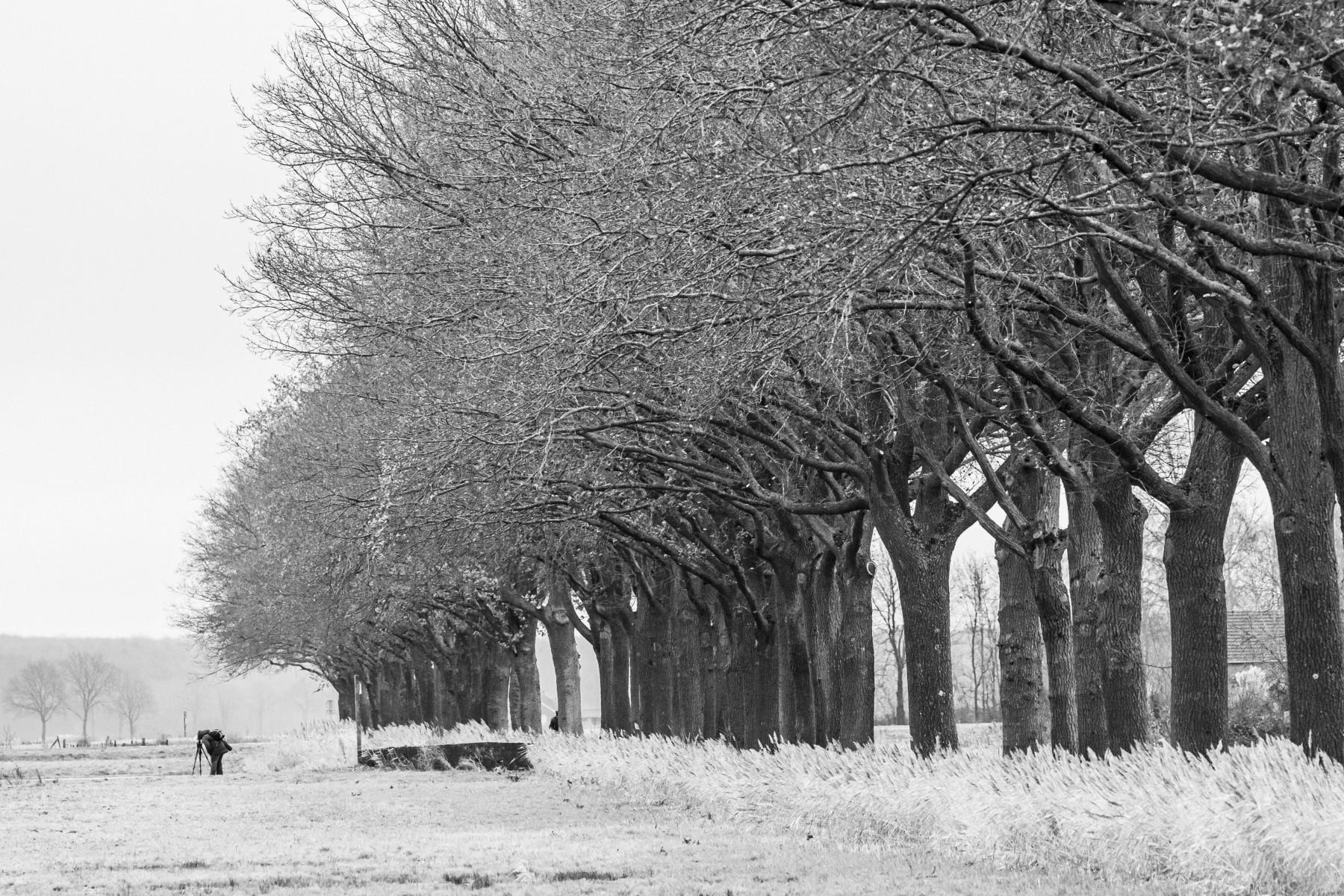 Inge Pfeil: Bomenrij, De Diepen