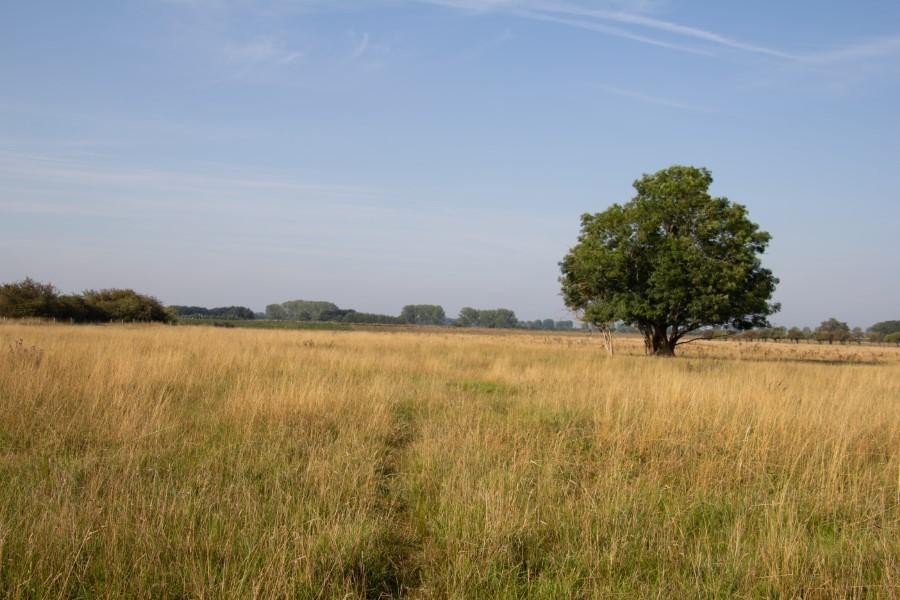 Astrid Sanders: landschap De Keent