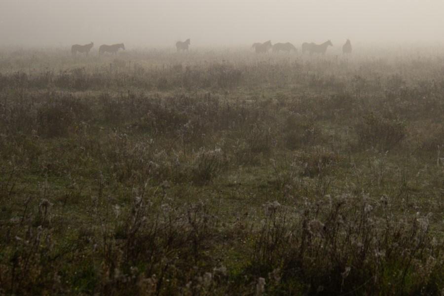 Astrid Sanders: Paarden in de mist