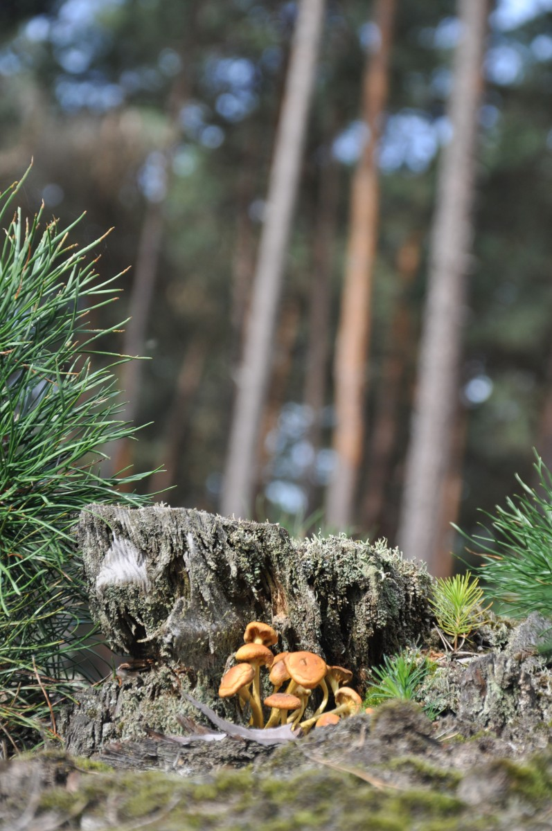 Bianca Dekkers-van Uden, Deelerwoud, ook het paddenstoelenseizoen is geopend