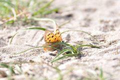 Bianca Dekkers-van Uden, Deelerwoud, verstopt achter een grassprietje