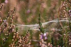 Astrid Sanders: Web in heide