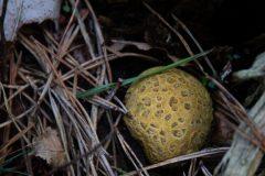 Astrid Sanders: Er zijn weer paddenstoelen