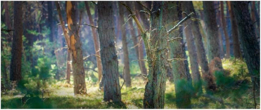 bomen-in-mist-kleurdsc01374-aangepast-klein