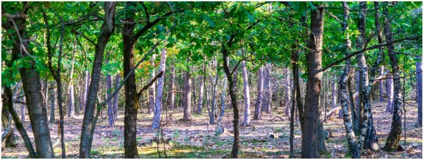 deelerwoud-3-breed-bos-kleur-dsc01370-klein