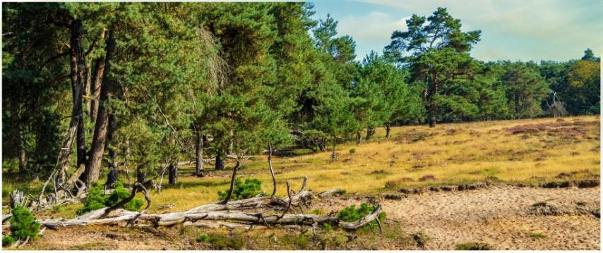 deelerwoud-boomstam-en-stuifduin-kleurdsc01380-klein