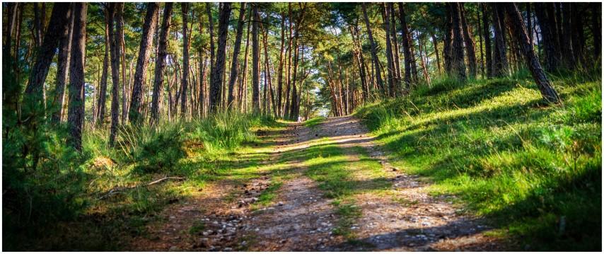 deelerwoud-bospad-kleurdsc01376-klein