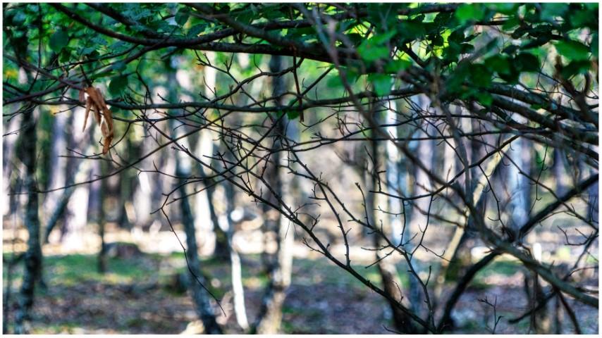 deelerwoud-kleurdsc01372-klein
