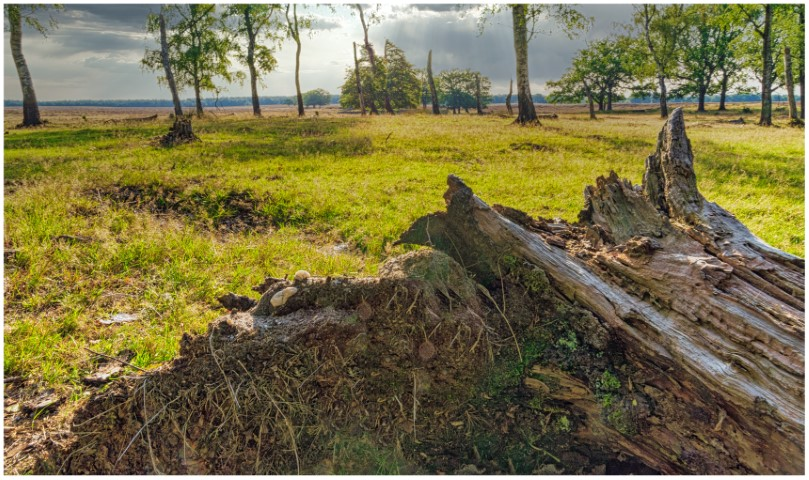 deelerwoud-stam-en-lucht-met-randje-kleurdsc01359-klein