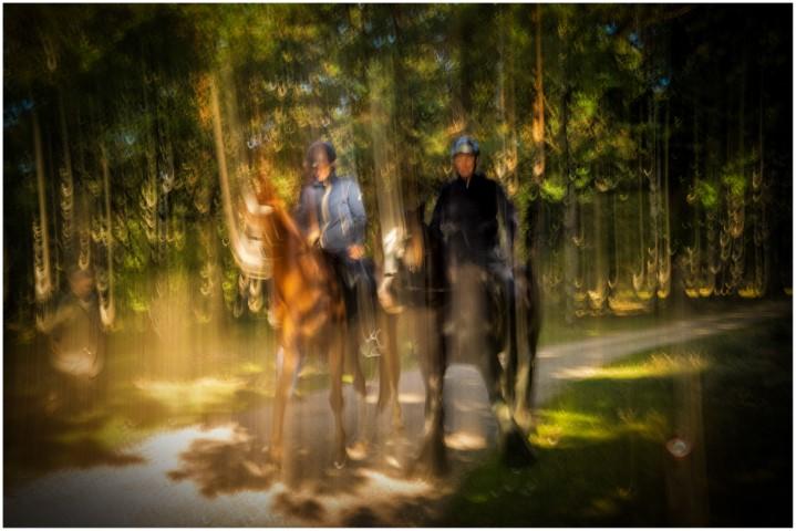 paarden-deelerwoud-kleurdsc01361-klein