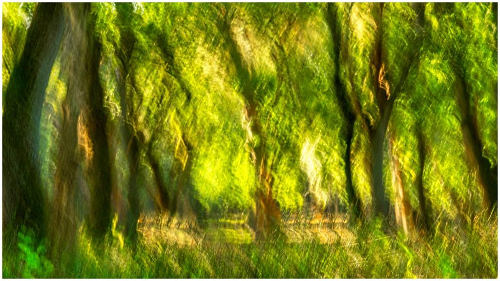 wonderbos-kleurdsc01366-aangepast