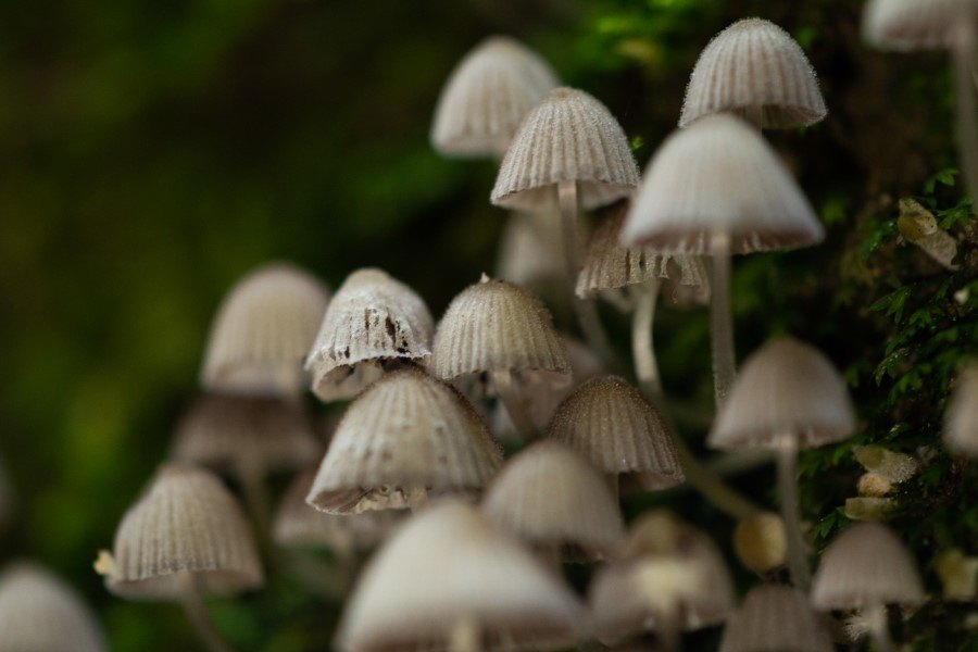 Astrid Sanders: Veel kleine paddenstoelen