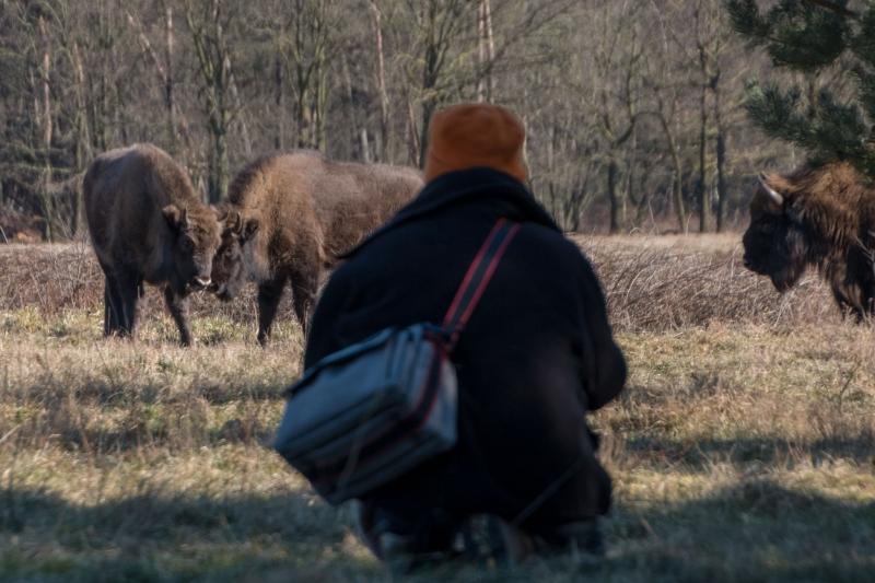 Fotograaf Inge Pfeil, De Maashorst, gevaarlijk dichtbij...