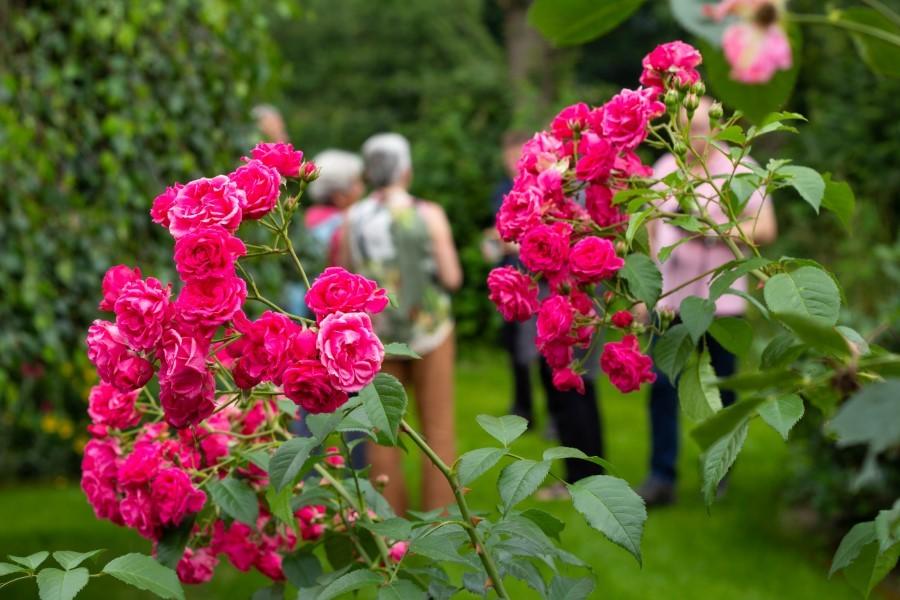 Astrid Sanders: Tussen de rozen