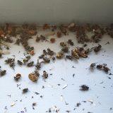 Els Baltjes: Insectenkerkhof
