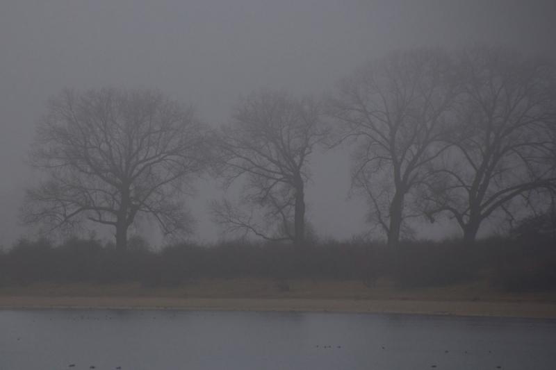 Fotograaf: Astrid Sanders 'Mist'