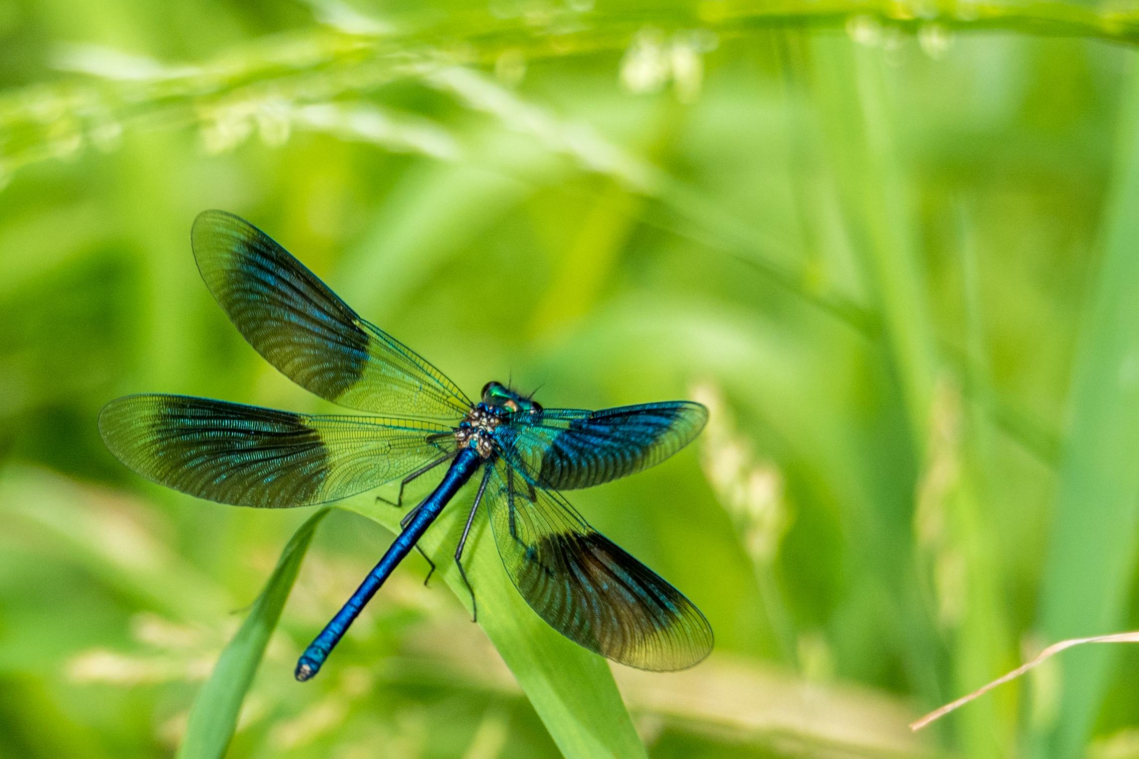 Fotograaf; Bert van Zijderveld 'Libelle'