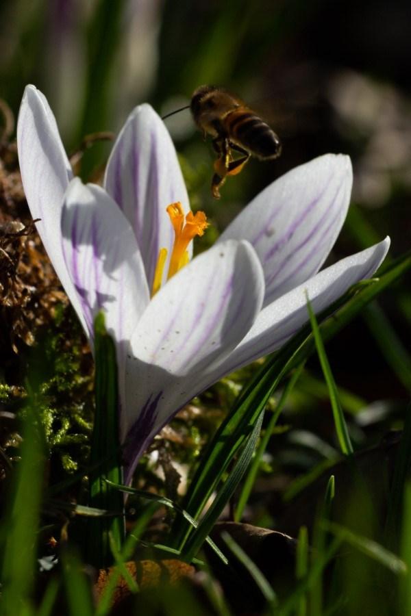 Astrid Sanders: de bijtjes zijn er weer