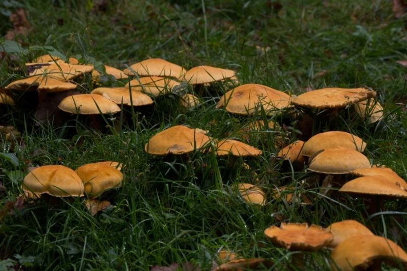 Fotograaf: Astrid Sanders 'Veel paddenstoelen '