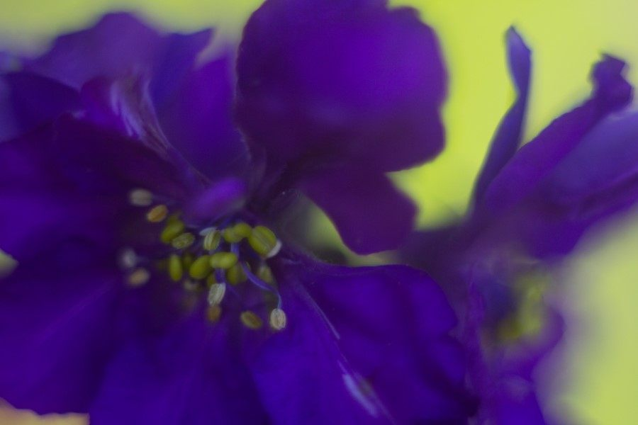 Astrid Sanders: Experimenteren met Helion lens