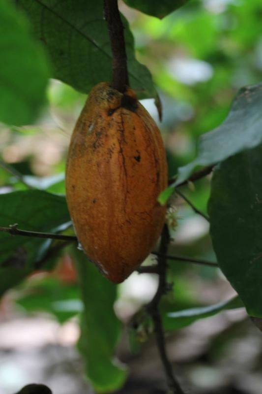 Fotograaf: Astrid Sanders 'Cacaoboon'