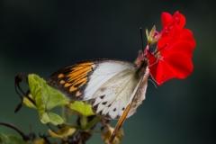 Fotograaf: Astrid Sanders 'De grote oranje tip'