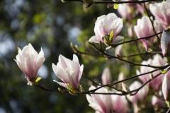 Fotograaf: Astrid Sanders 'Magnolia'