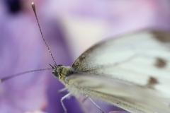 Fotograaf: Astrid Sanders 'Natuur in de tuin'