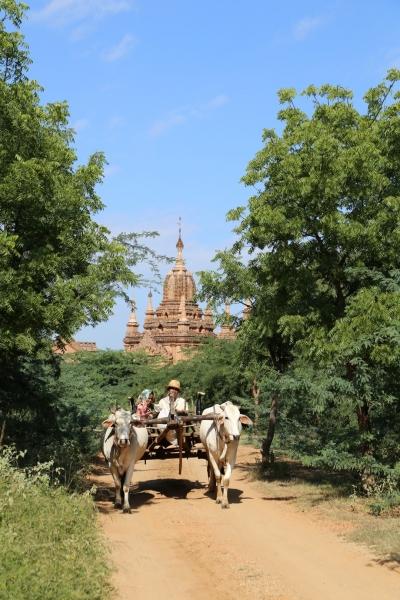 Ossenkar Bagan Myanmar
