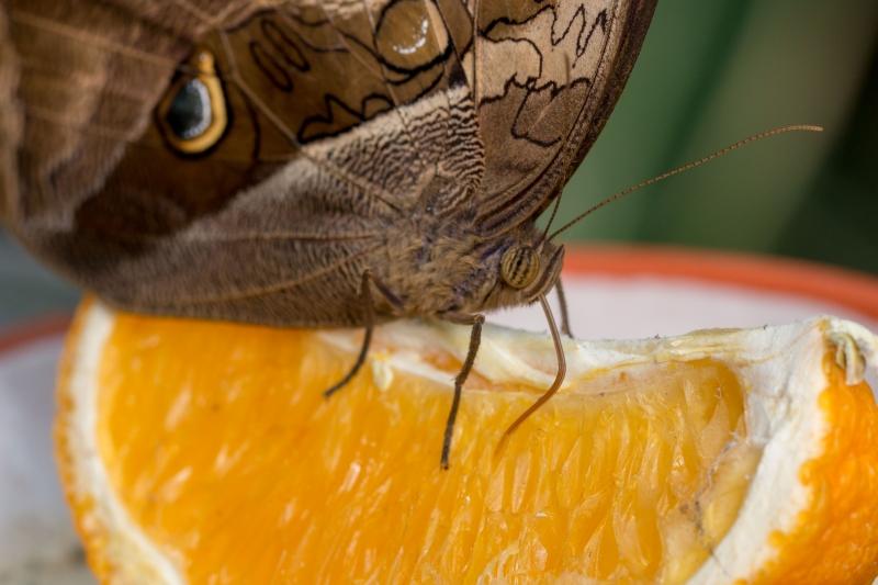 Fotograaf Inge Pfeil, Klein Costa Rica