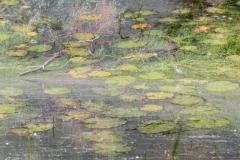 Fotograaf Inge Pfeil, Claude Monet in de Millingerwaard (meervoudige belichting)