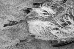 Fotograaf Inge Pfeil, Dood