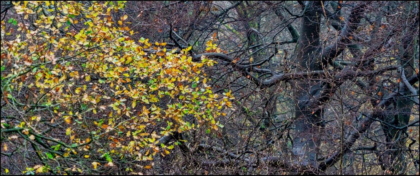 Blad-geel-groen-met-zwarte-bomen-nat-kleurDSC01790-Middel