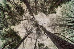 bomenrij-schengen-Jeroen Hoogakker