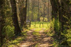 lommerrijk-wandellaantje jeroen hoogakker