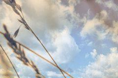 riet-met-wolken jeroen hoogakker