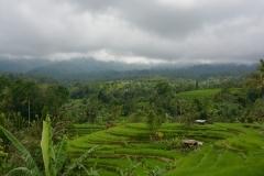 Rijstveld (Bali)