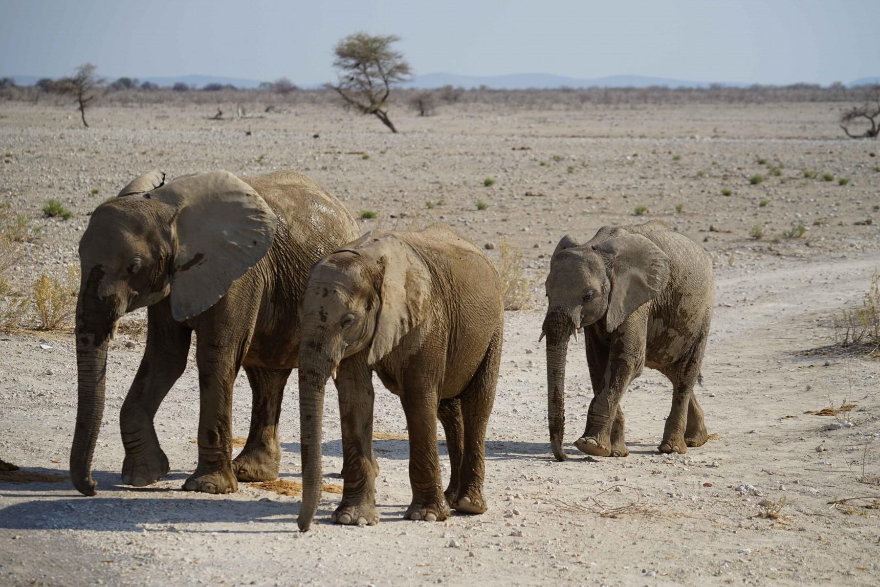 026-olifanten